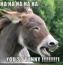 Funny donkey quotes hindi - photo#28